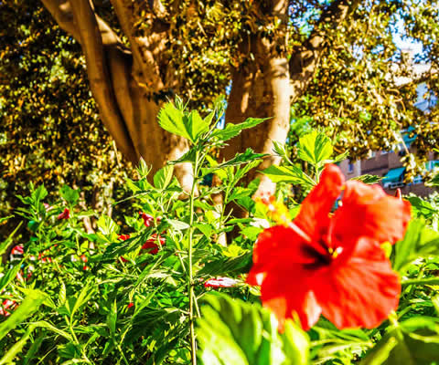Los secretos del jardin de floridablanca me encanta murcia for Cancion secretos en el jardin