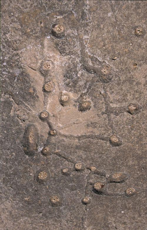 Petroglifos del Arabilejo